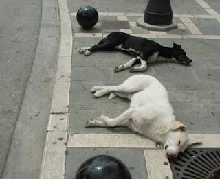 Ορεστιάδα: Διαστάσεις παίρνει το πρόβλημα με τα αδέσποτα