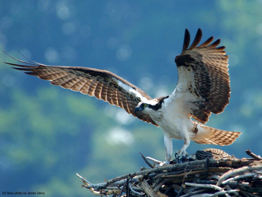http://1.bp.blogspot.com/-R6Z_qUdq9CY/T-pfJuM0sVI/AAAAAAAAGaE/T6a9ZMnBrXw/s1600/Bird-wallpaper-8.jpg