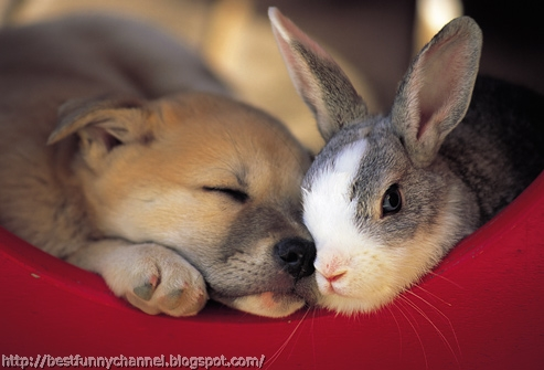 Cute puppy and bunny.