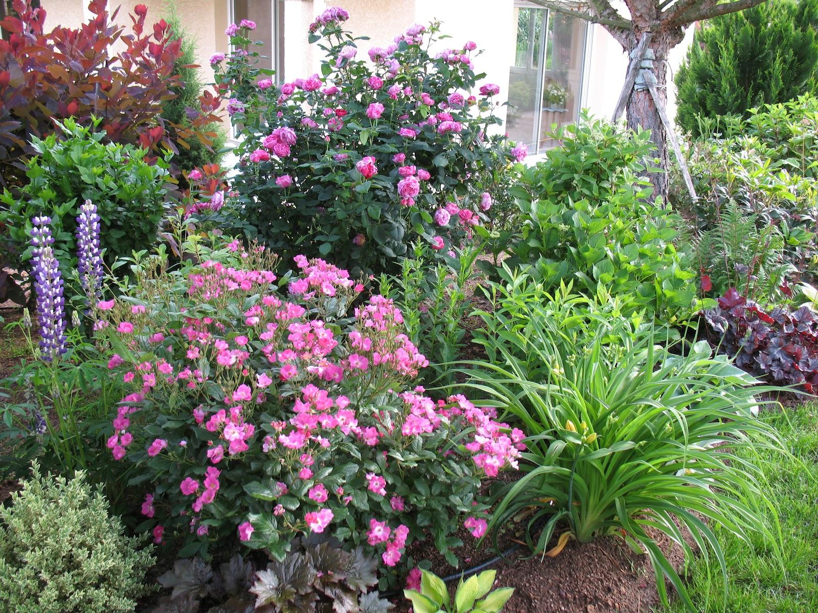 Roses du jardin ch neland rosier professeur christian for Jardin roses
