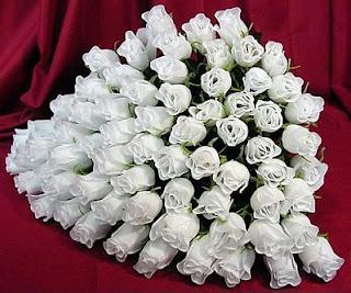 Flores, Fotos de Rosas Blancas, parte 3