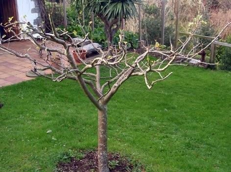 Disfrutar con el huerto y el jard n poda de invierno de - Como cuidar los arboles frutales ...