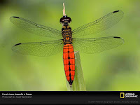 Dragon Fly Photos and Pictures 24
