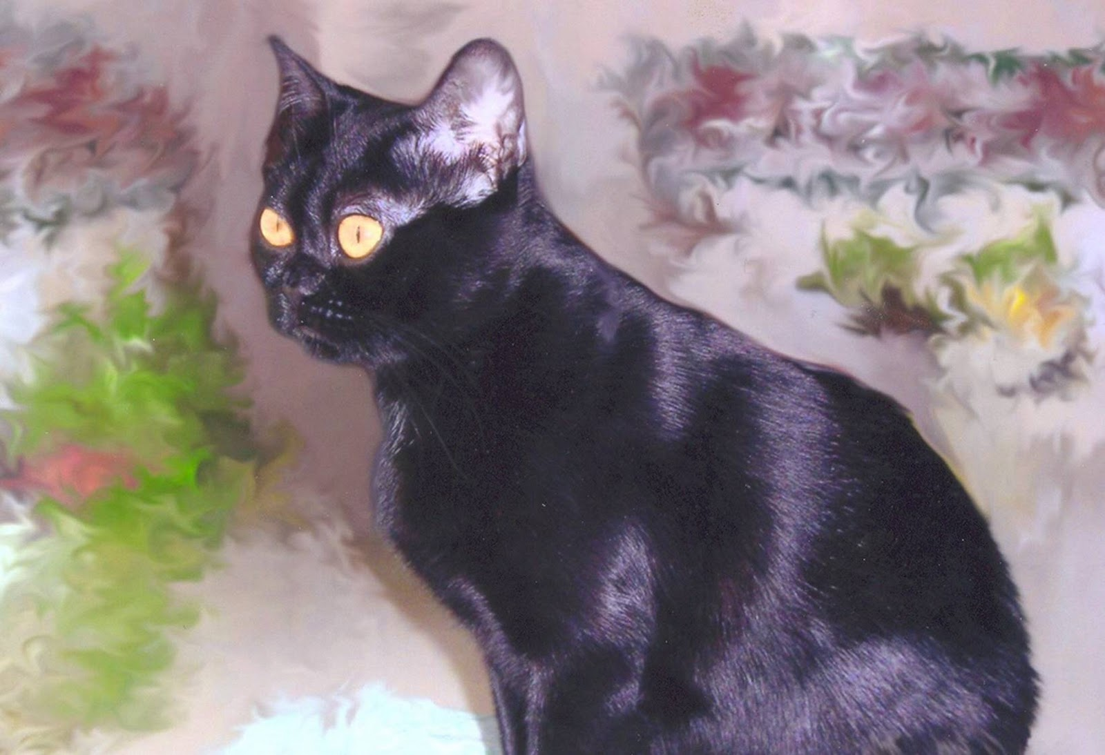 Http Amazingdogsbreeds Blogspot Com 2011 02 Bombay Cat Html
