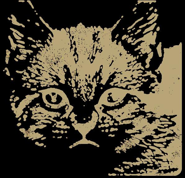 猫の顔アップ(動物)