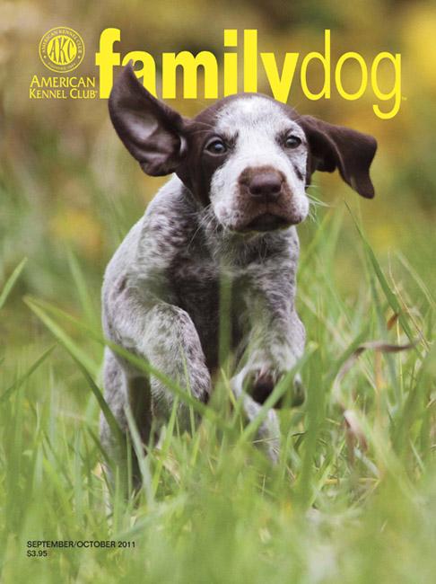 Magazine Family Dog Akc Family Dog Magazine