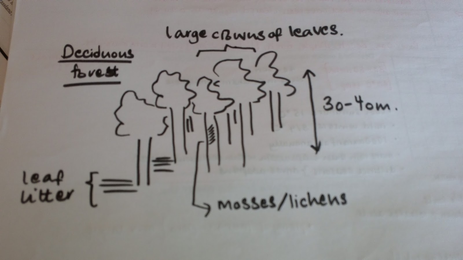 Deciduous Forest Biome A Climatic Climax Geography A2 Level