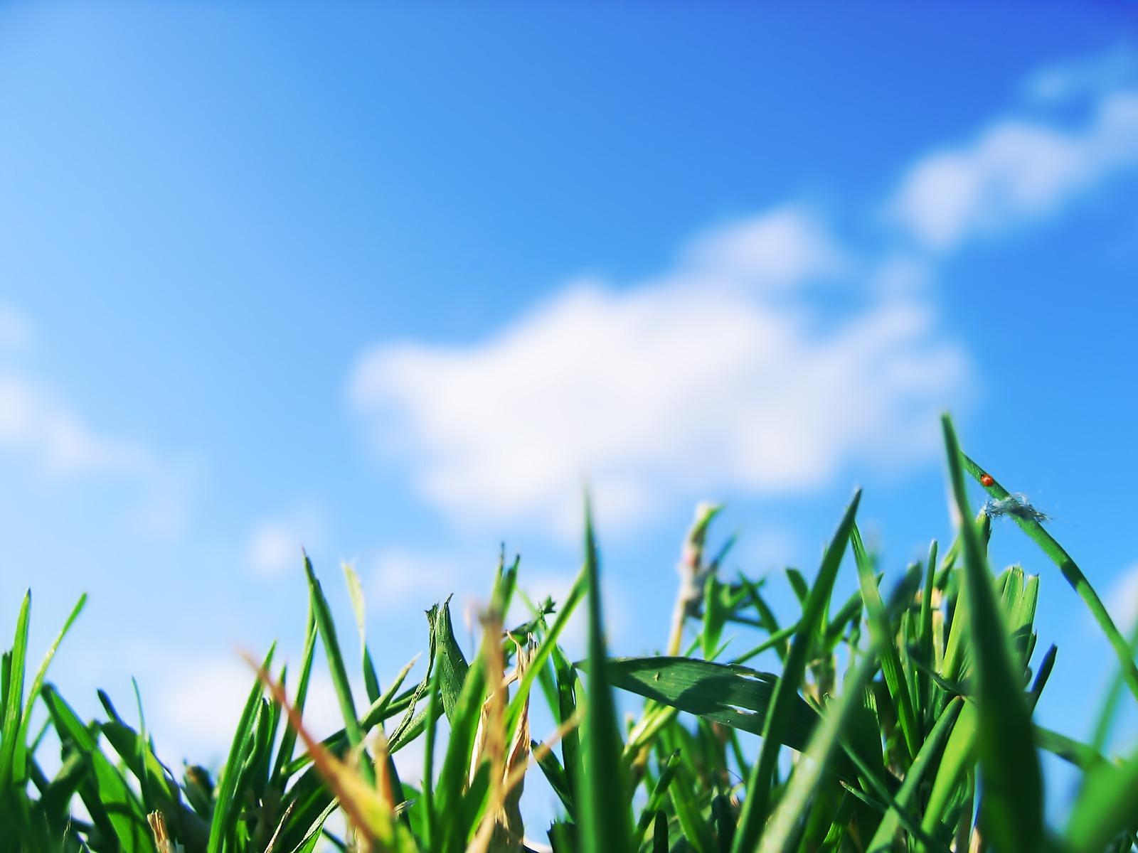 http://1.bp.blogspot.com/-R8LO_VQUixE/ThfkGQOs7mI/AAAAAAAAAOw/rtDZQmg8JvQ/s1600/Grassy_Stuff_1600_x_1200.jpg