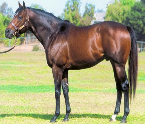 10mm Wargaming: Painting Horses  Dark