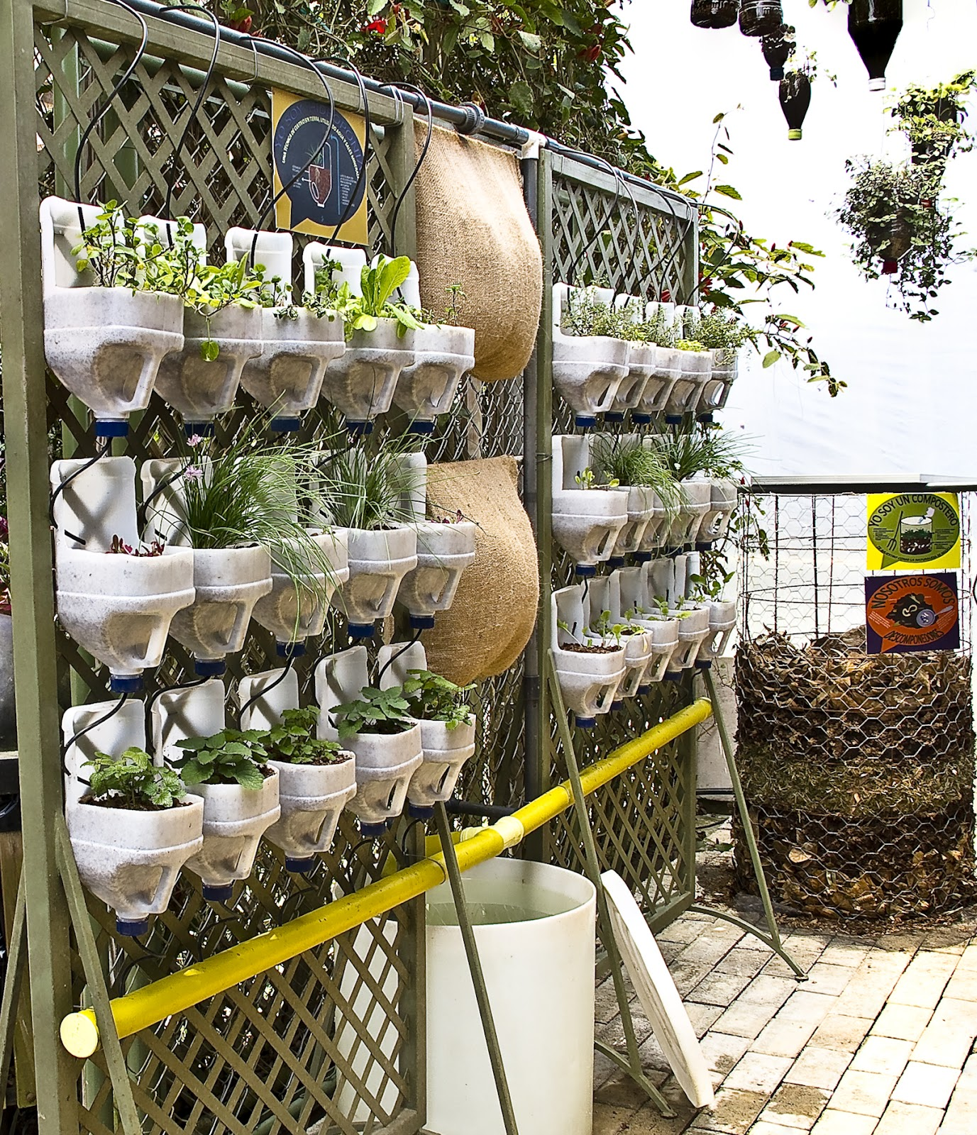 Digital camera adventures tras escenarios energ a - Cultivo de hierbas aromaticas en casa ...