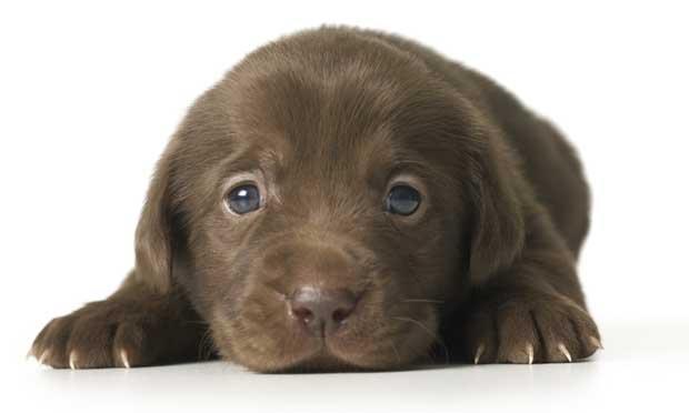 Dessa marcelino os cachorros mais fofos - Comida para cachorros de un mes ...