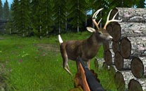 game-hunting-animals-deer-drive