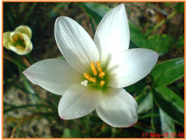 Ciri yang dimiliki oleh tumbuhan yang memiliki bunga tersebut pada