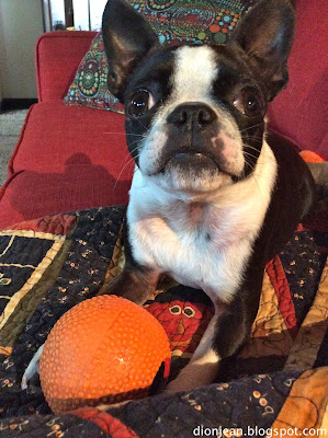 Sinead and her Boston terrier dog toy