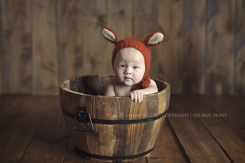 utah fox baby salt lake baby photographer