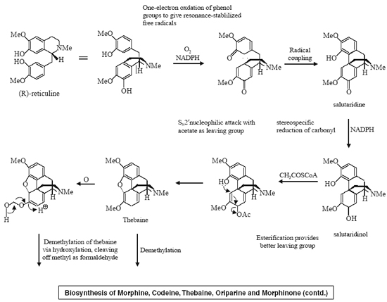 Biosynthesis of Morphine, Codeine, Thebaine, Oriparine and Morphinone (contd.)