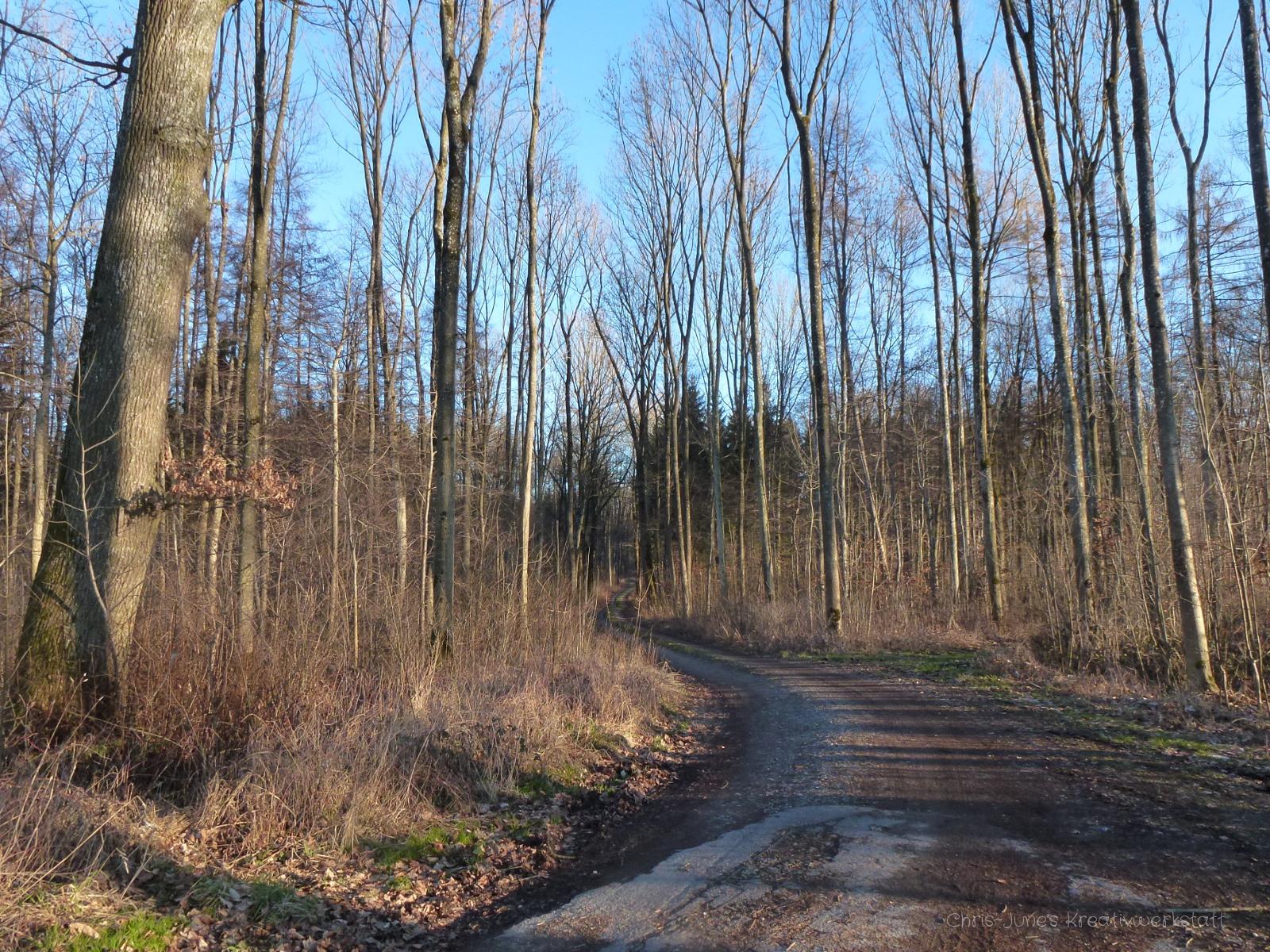 Waldweg 1 im Februar