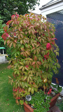 Ein Herbstbild....
