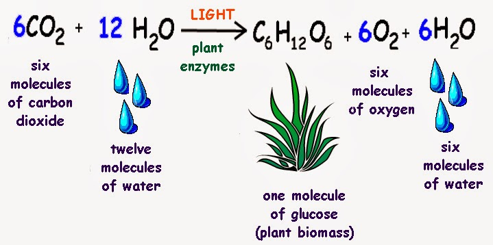 importance of photosynthesis to humans The vital importance of photosynthesis to life on earth harun yahya this process is very important because other animals who do not produce their why photos.
