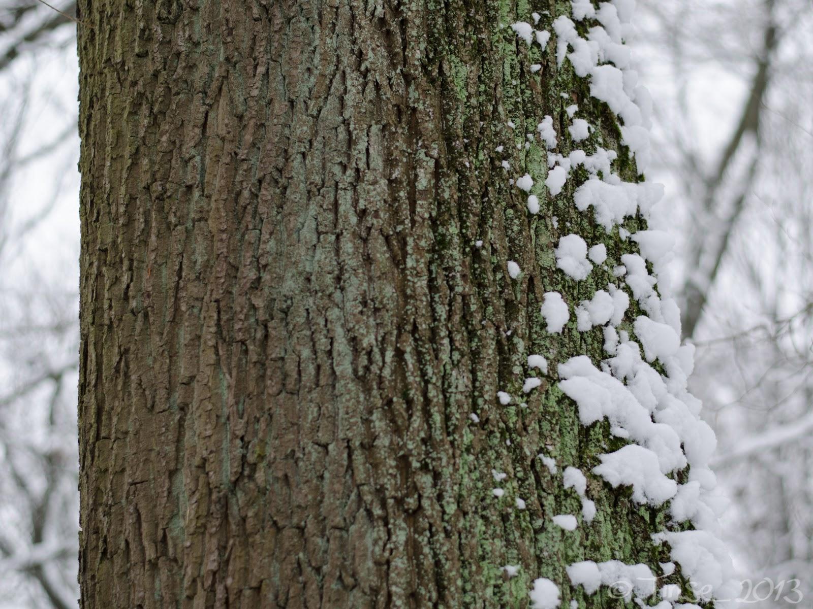 Die Anderen Winterland Beiträge Findet Ihr Wie Immer Bei Nic. Ich Muss  Zugeben, Dass Ich Des Winters Jetzt So Langsam Dann Auch überdrüssig Bin.