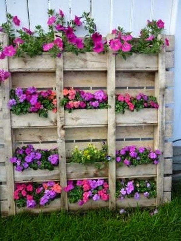 plaeuteurs plantes palettes