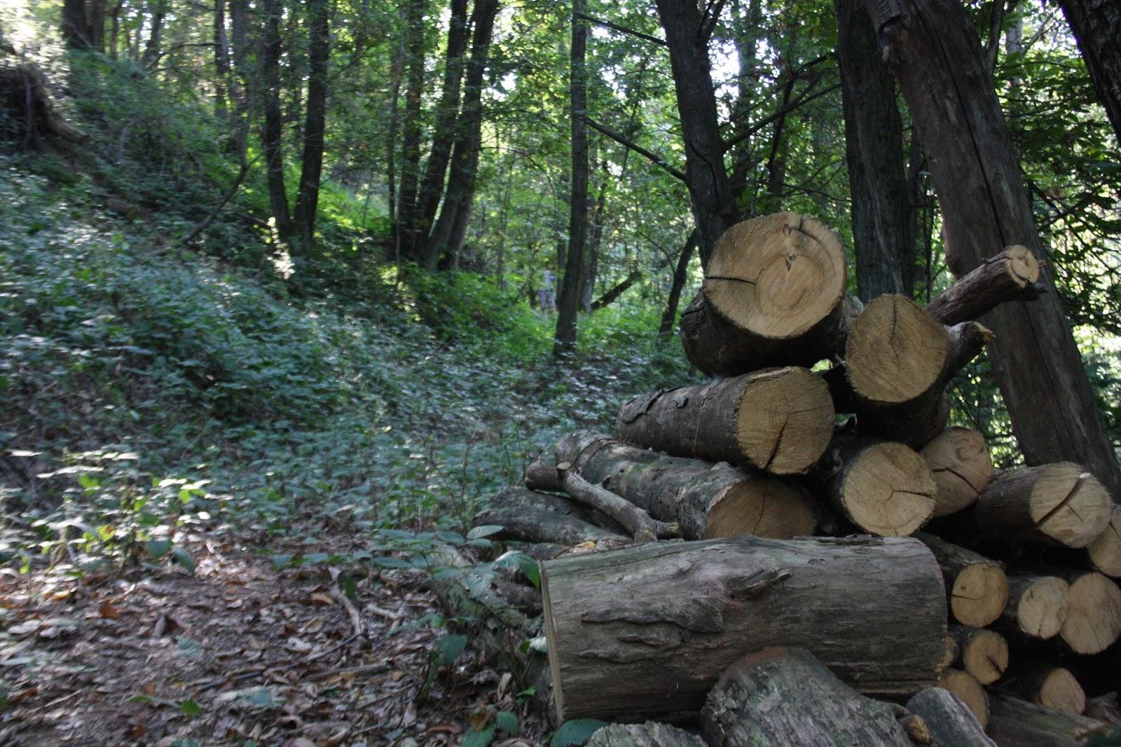 Il coltello di banjas nel bosco for Piante da sottobosco