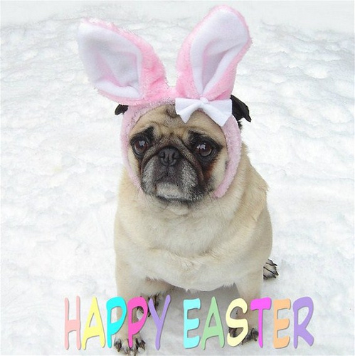 Easter dogs and cats