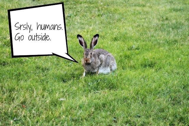 UAlberta Rabbit Meme