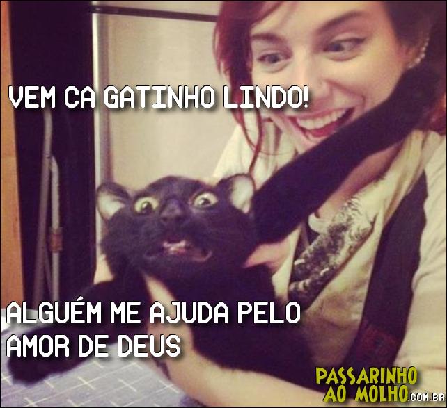 gato, medo, dona malvada