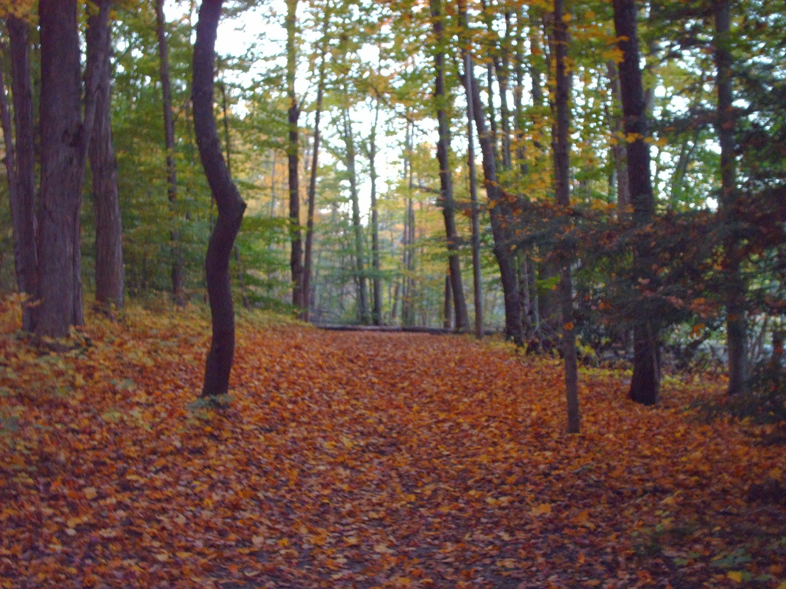 Leaf-covered Vansittart Woods path