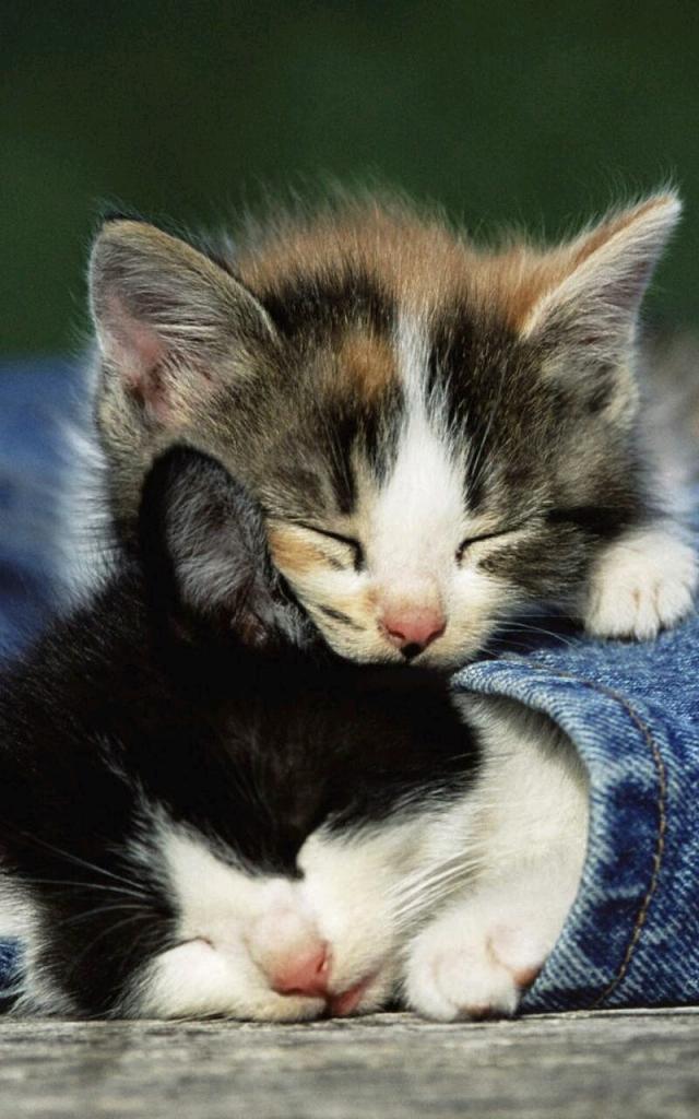 Dua Anak Kucing Lucu Sedang Tidur Imgoke