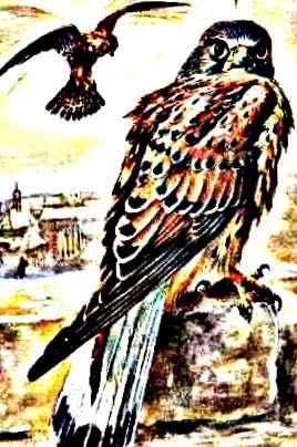 http://1.bp.blogspot.com/-RB896TXAvnk/Urxof1jIfLI/AAAAAAAAAyE/OC1GFCBYg6o/s1600/_falke.jpg