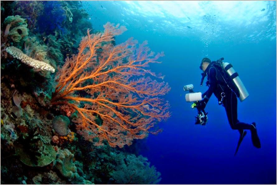 Menyelam Menikmati Keindahan Pemandangan Alam Bawah Laut Raja Ampat