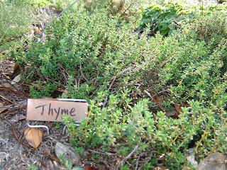 Organic Herbs, Thyme