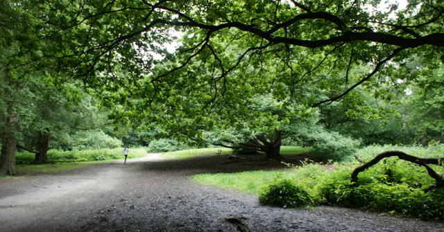 Lone runner at Hampstead Heath, London