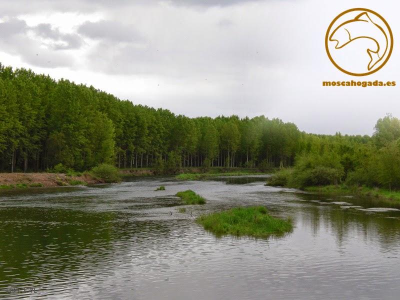 rio esla, Mansilla de las Mulas, Cistierna, León, pesca, truchas