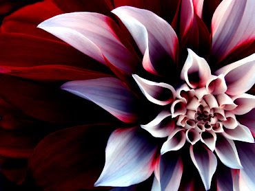 #21 Flowers Wallpaper