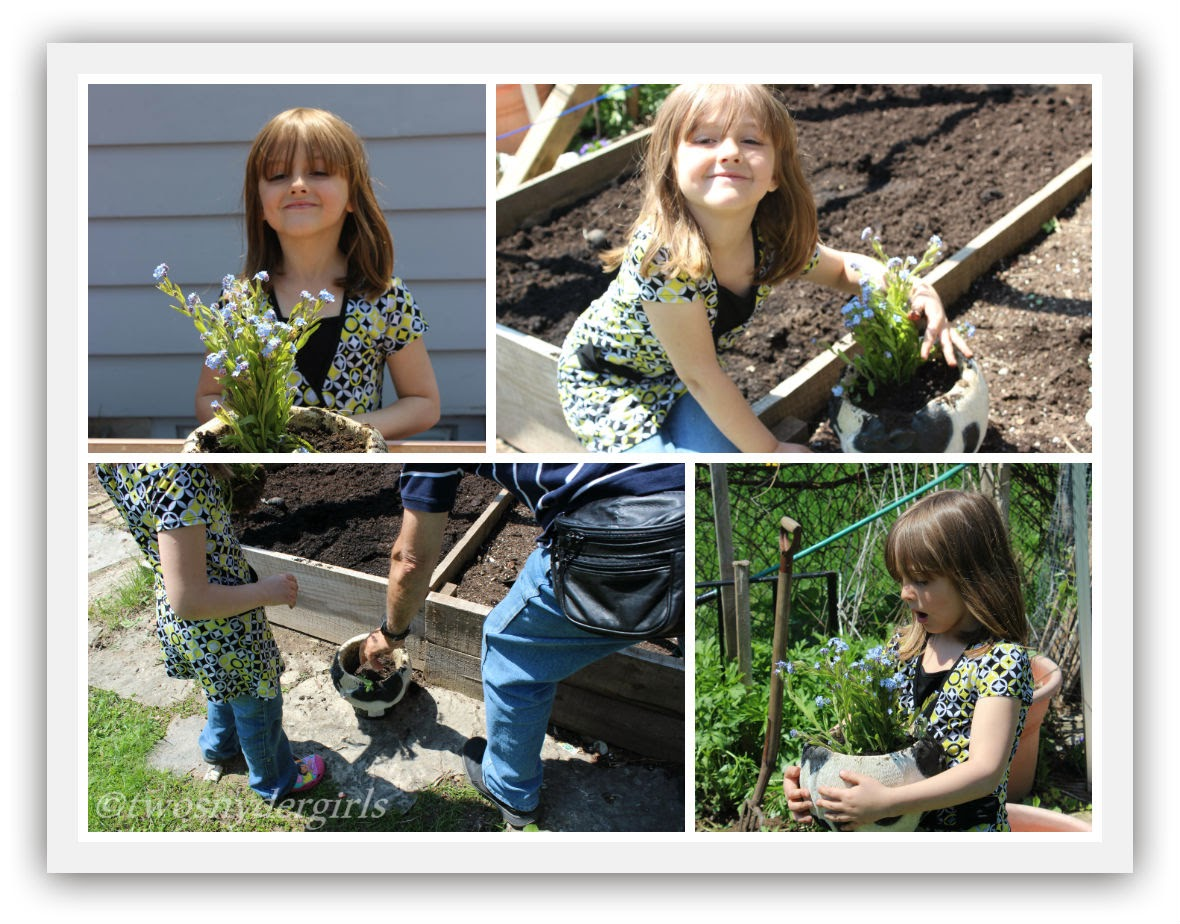 Young child planting forget-me-nots in a cow shaped planter