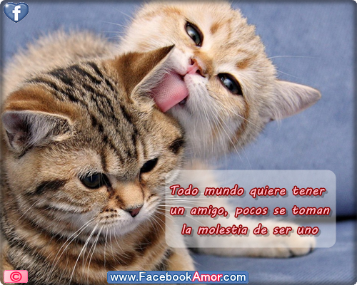 Imagenes bonitas de gatos con frases de amistad