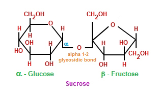 Sucrose molecule: combination of monosaccharides glucose and fructose