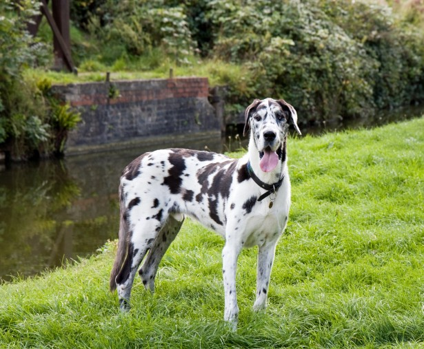 All about Dogs: List of the Dog Breeds