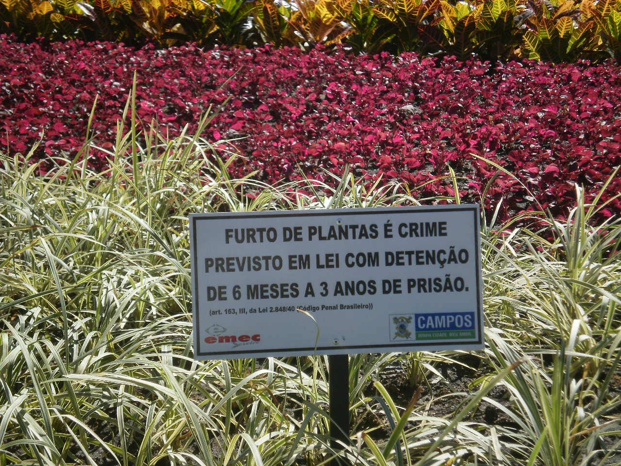 plantas cidade jardim : plantas cidade jardim: que furta uma planta em jardim público muitas plantas tem sido