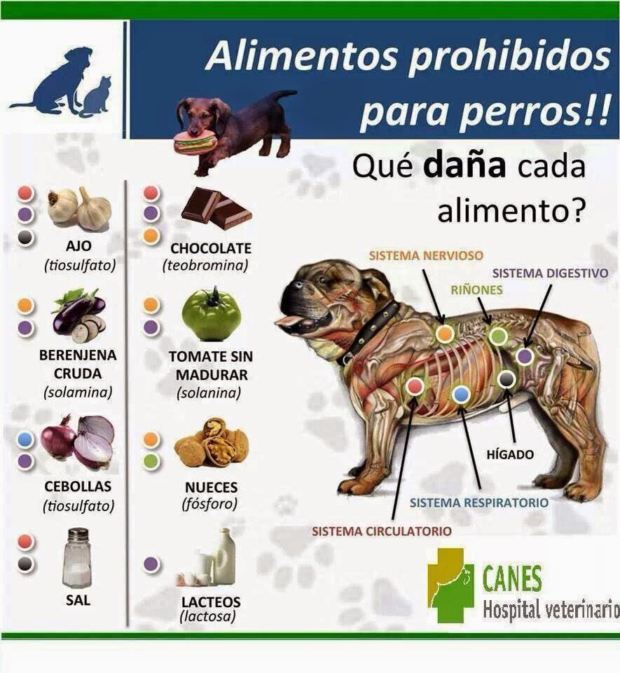 Animal frutas aptas para la dieta del perro y alimentos prohibidos - Alimentos recomendados para perros ...