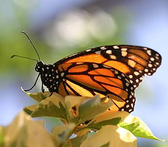 Image Result For Life Cycle Of Butterfly Hd Wallpaper