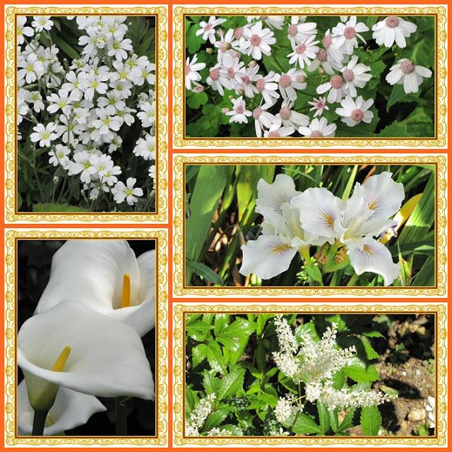 fringe-festival-flowers