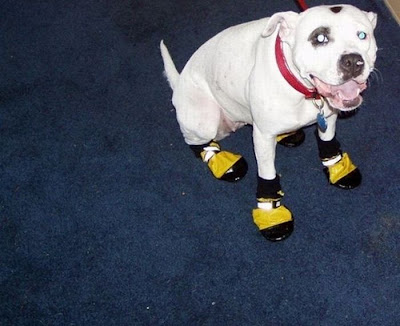 Funny Dog Wear Shoes