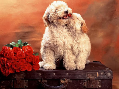 besplatne e-card čestitke za Valentinovo slike pozadine za desktop