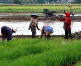 Mery Cindra Masalah Jangka Panjang Sektor Pertanian