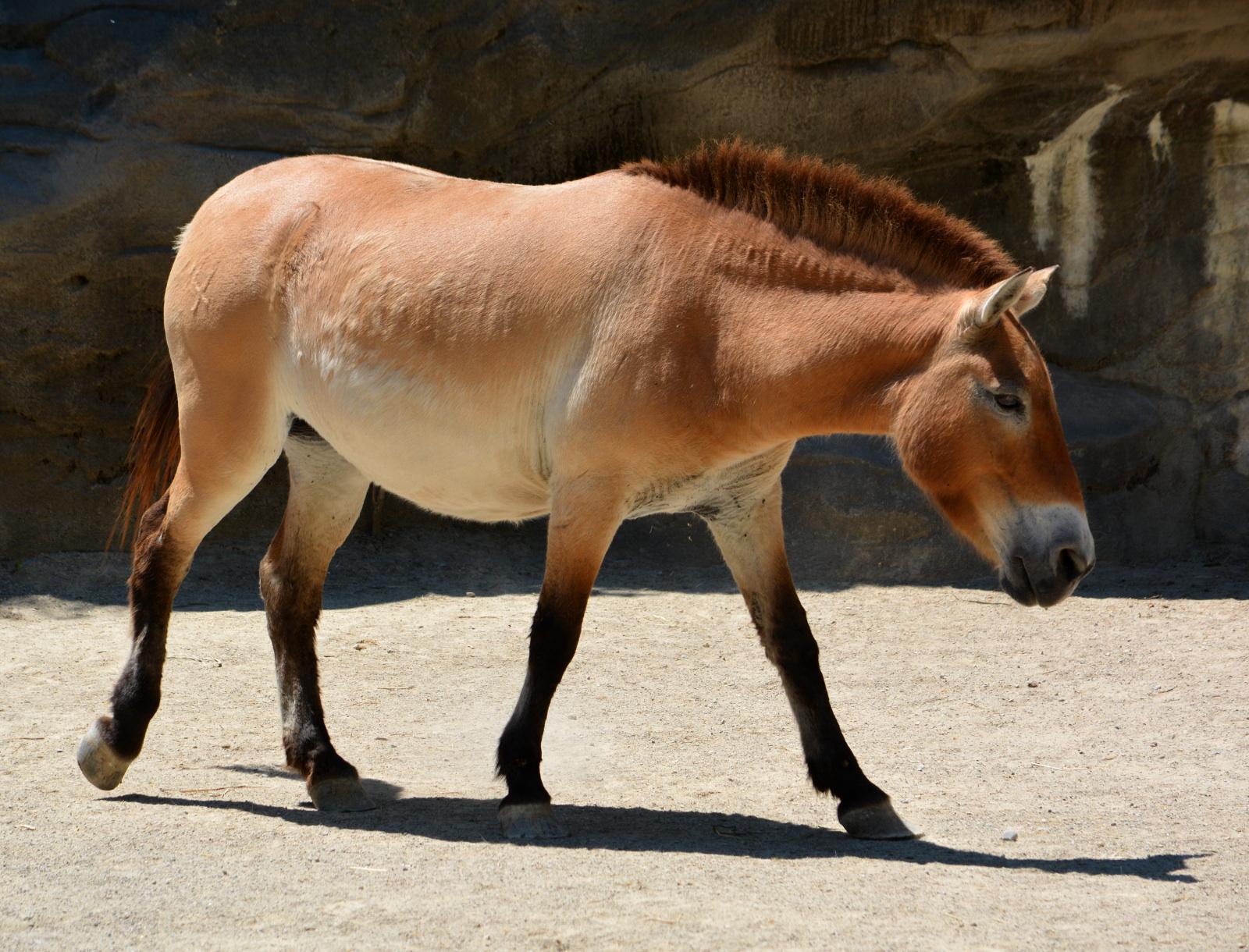 cozy birdhouse | przewalski's horse