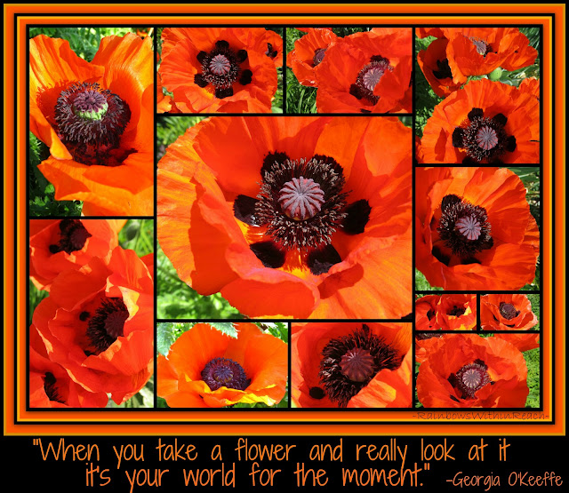 photo of: Photo Collage of Poppies with Georgia O'Keeffe quotation